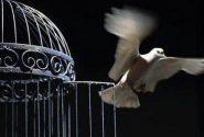 خیر نیک اندیش، اسباب آزادی ۳۰ زندانیِ مجرم مالی در کاشان