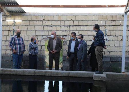 بازدید معاون وزیر جهاد کشاورزی از مزرعه سلامت حسین آباد