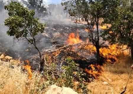 آتش سخت مهار، به جان مزارع روستای سار / مویه کنید !